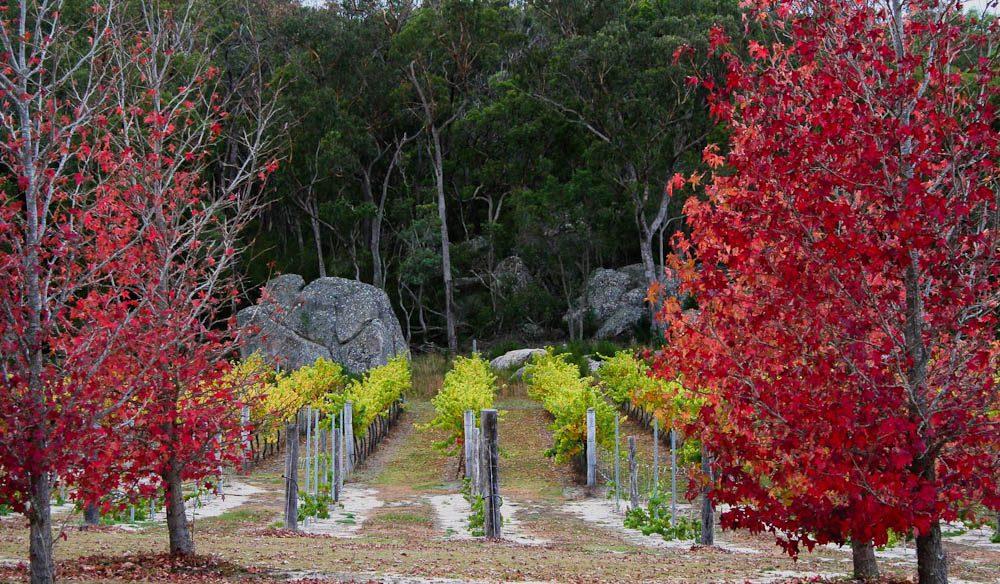 Autumn strikes the Strange Bird winetasting trail, Granite Belt, Queensland.