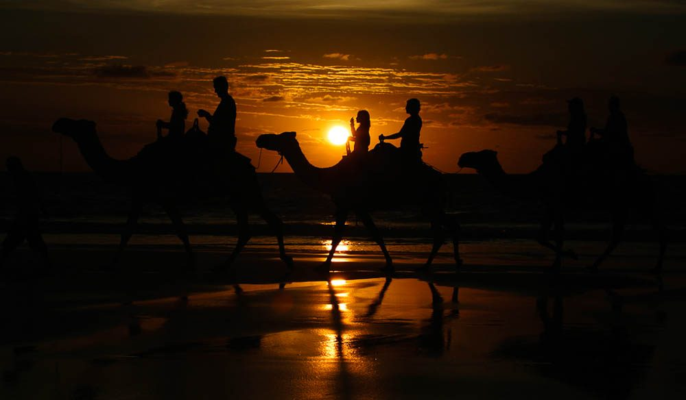 Camel silhouette, Cable Beach (Wayne Talbot)