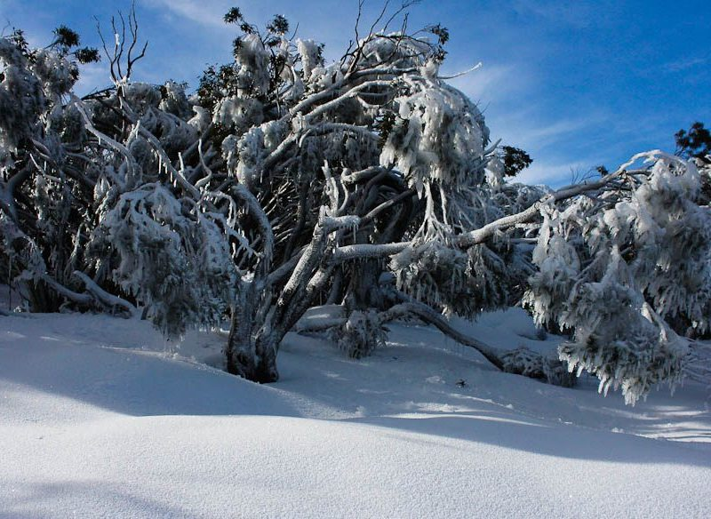 Mt Baw Baw, Victoria (by Lindsey Garside)