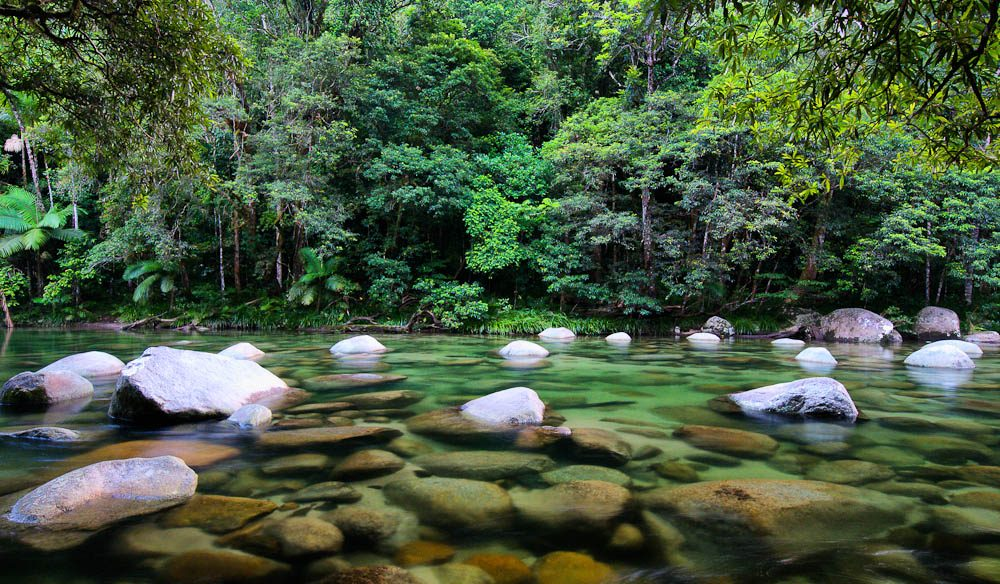 The ancient mossy river boulders of Mossman Gorge, Daintree rainforest.