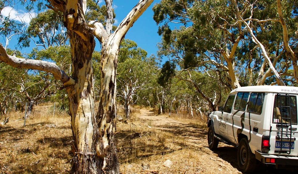 Seeing the other sides of McLaren Vale and its surrounds by 4WD - don't worry, you still see the wineries, of course.