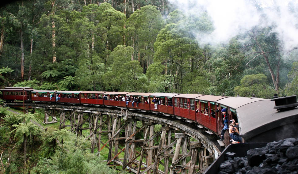 Puffing Billy in the forests of the Dandenong Ranges (Rodney Avery).