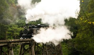 Puffing Billy at full steam in the Dandenong Ranges (Photo: Nick Anchen).