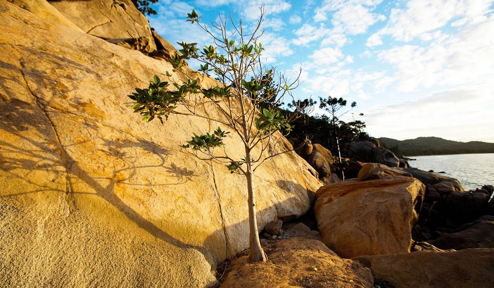 With two-thirds of Magnetic Island a national park, there is plenty of nature to explore.