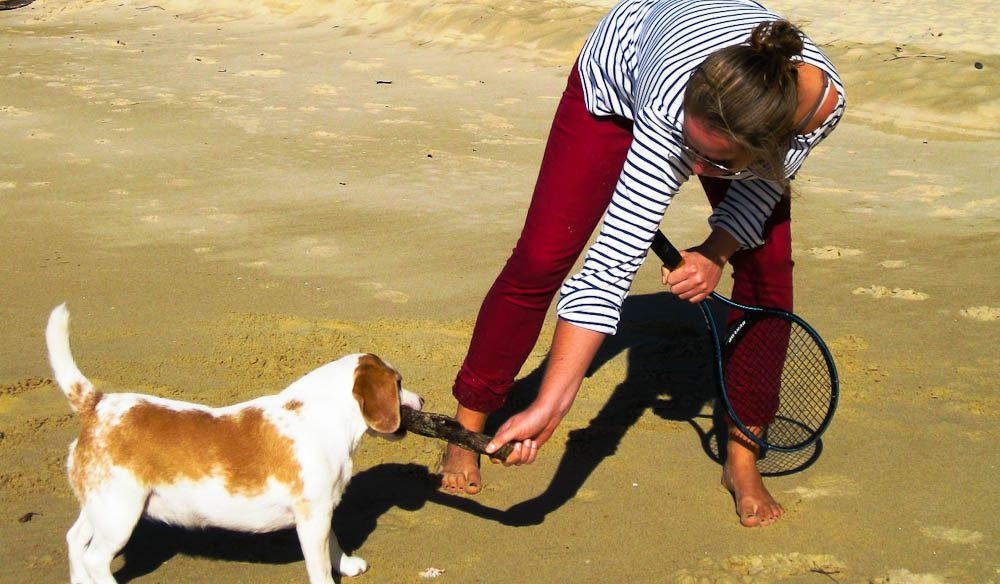 Charli performing her daily house sitting duties at Valla Beach with Crumpet the beagle.