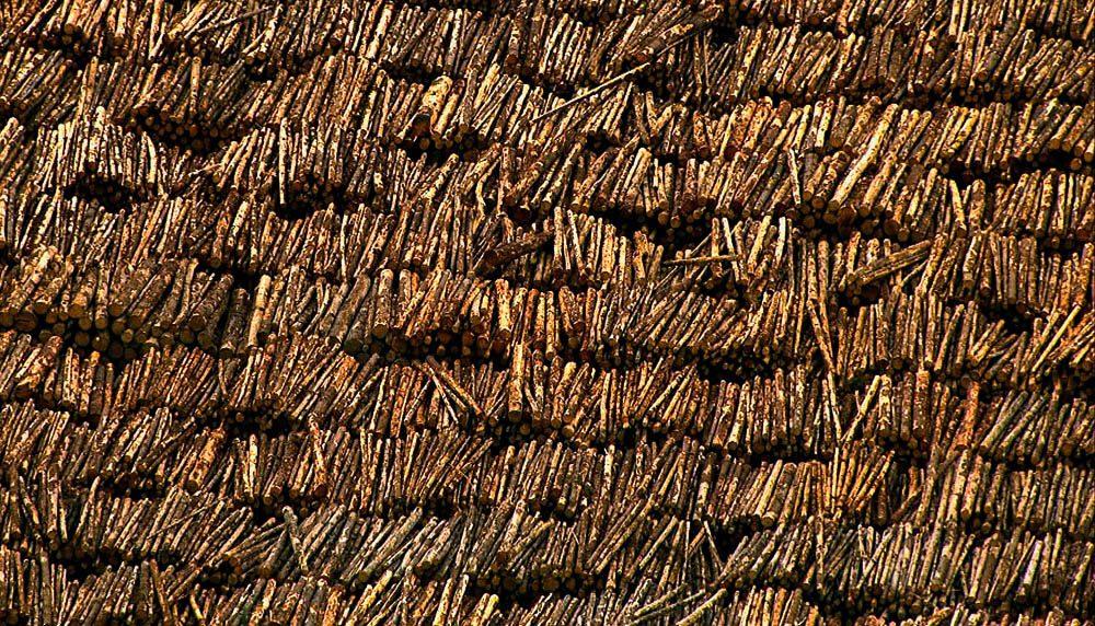 Logs en masse in Tasmania.