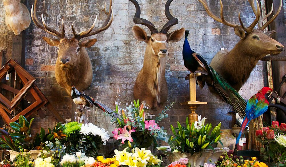 Urban jungle: fresh flowers and taxidermy at Seasonal Concepts.