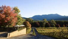 Boynton's Feathertop Winery, near Porepunkah.