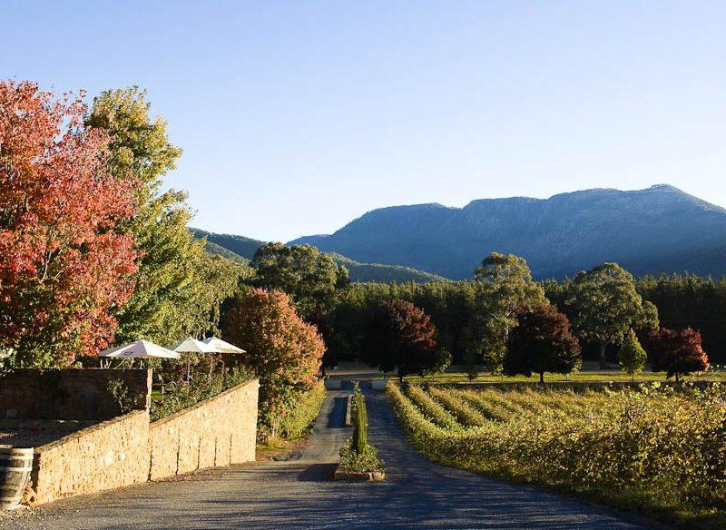 Boynton's Feathertop Winery, near Porepunkah.