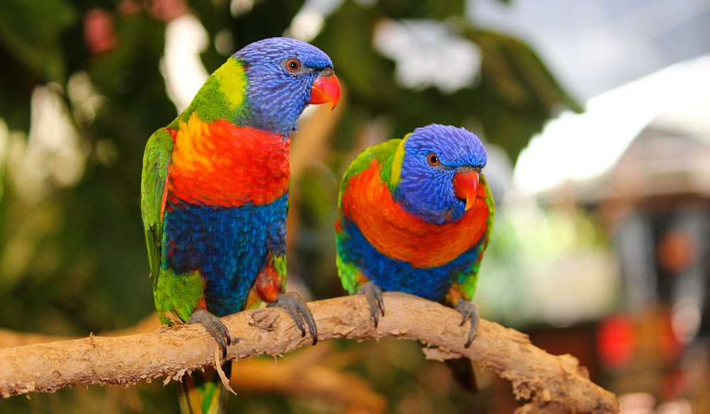 Over the rainbow: Over 80 bird species call Port Douglas Wildlife Habitat home.