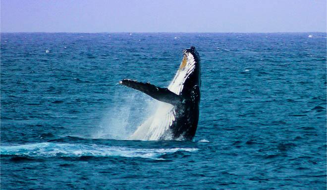 4. Bass Point Breah, Michelle Jones. Fenwick-Bass Point Reserve