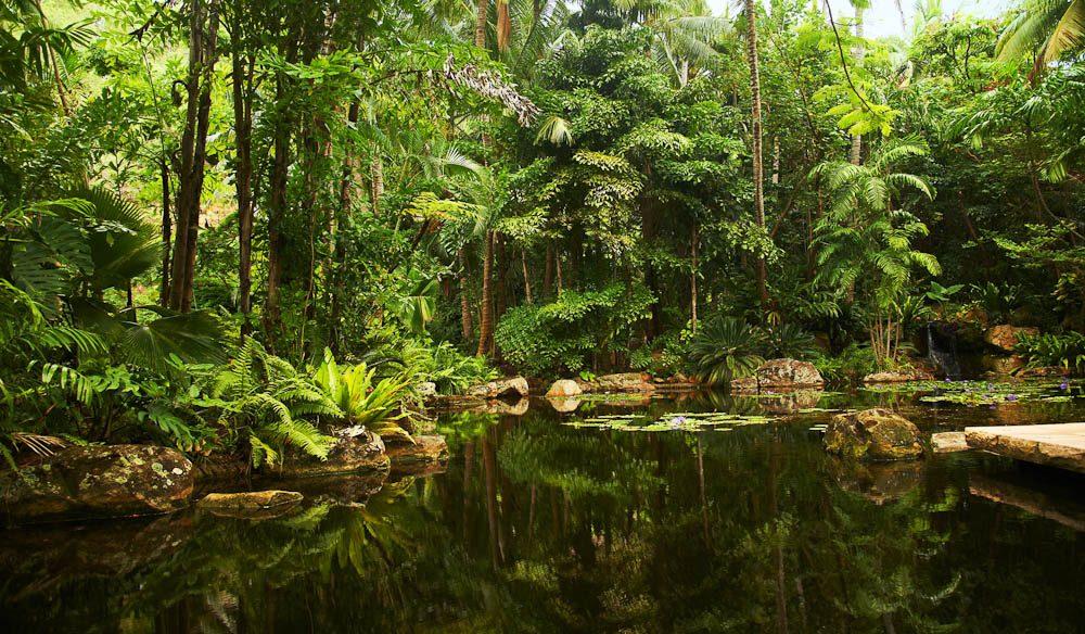 Rainforest on Hayman