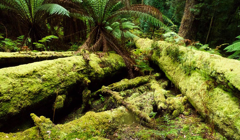 Deep in the Tarkine rainforest.