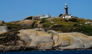 Montague Island: Time it right and you can see whales and penguins up close.