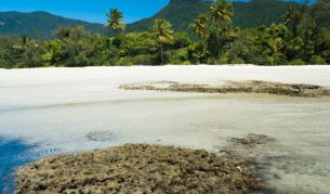 Cape Tribulation offers a natural trifecta.