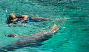 Up close and personal with the Baird Bay sea lions.