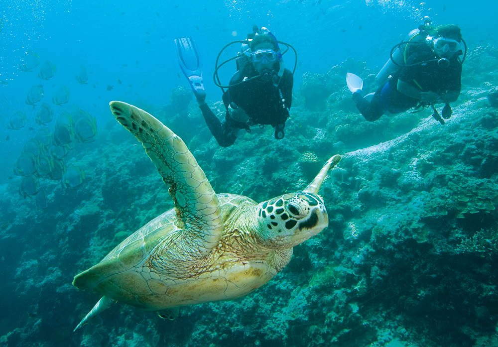 Between November and March is the best time to see Heron Island's turtles.