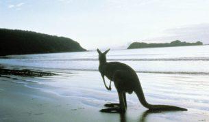 Kangaroo Island: Way more than just the obvious.