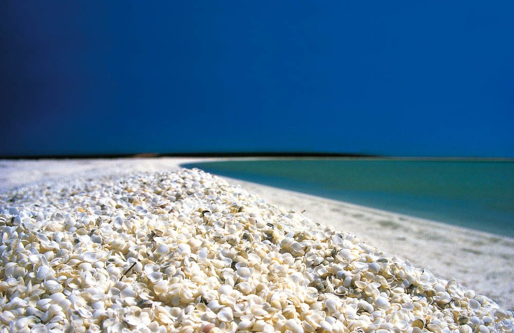 36 visit a beach made entirely of shells wa australian traveller