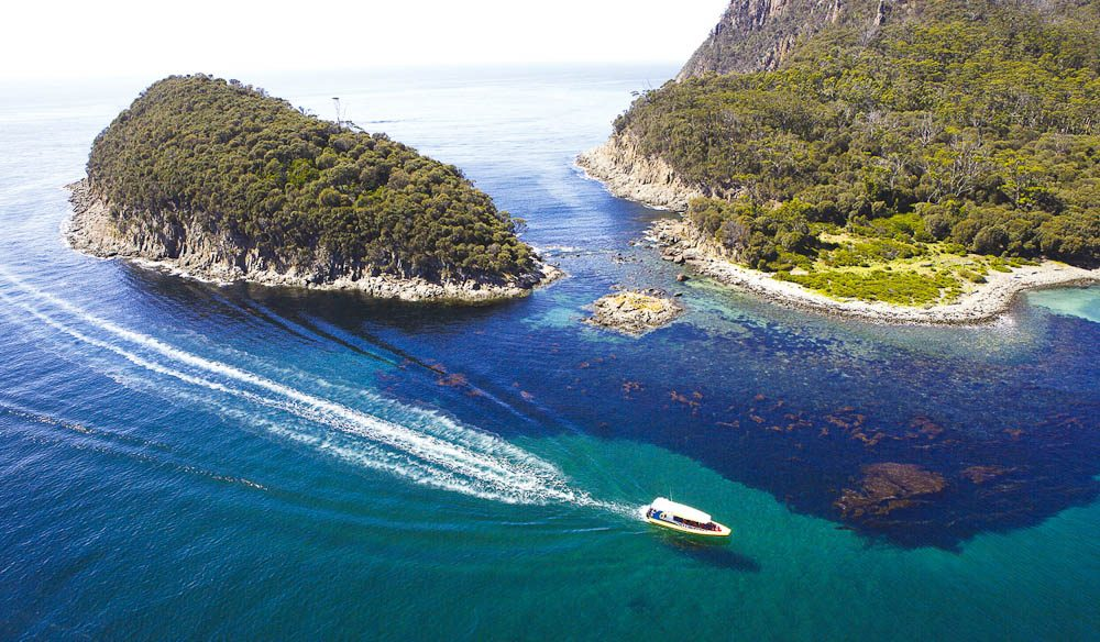 Plenty of wildlife, such as dolphins, on the wild ride around the wild coast of Tasmania's Bruny Island.