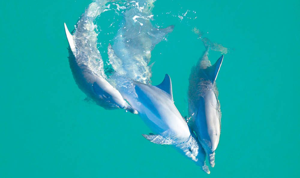 Everyone loves dolphins - and why wouldn't you.