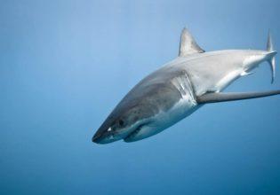 The truth about shark diving - Australian Traveller