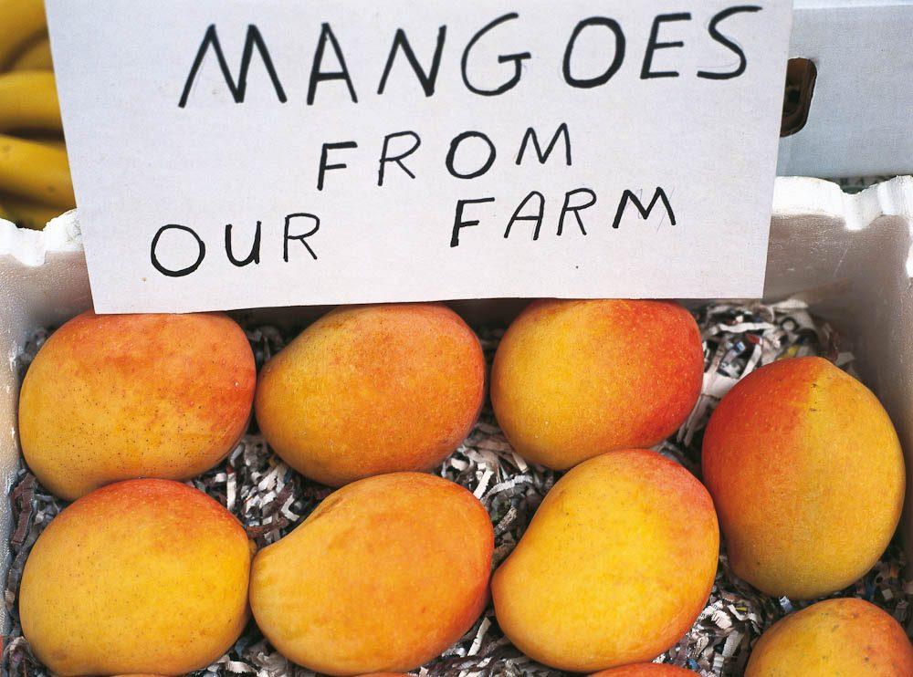 AUSTRALIAN MANGO