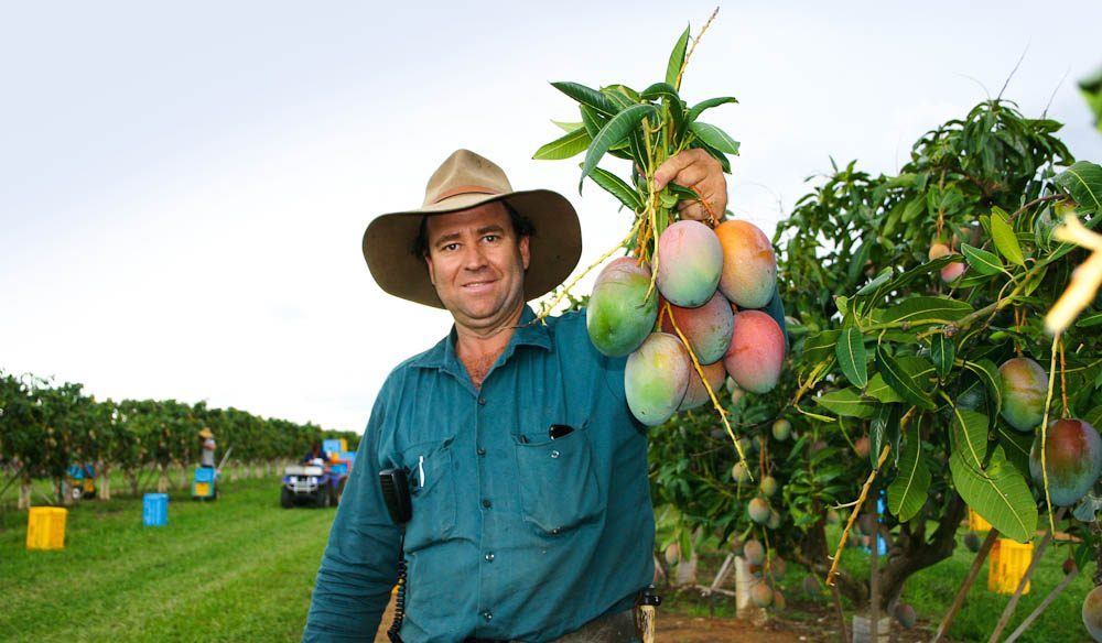 Fresh for the Golden Drop Winery – the first commercial mango winery in the world.