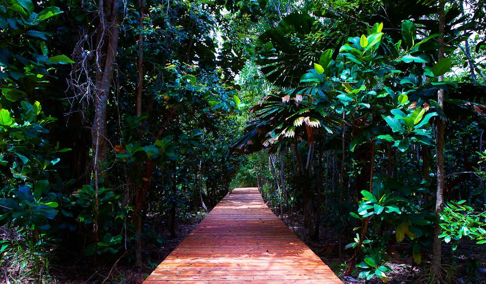 A private stroll in Alkira's patch of Daintree? (photo: Josh Thies)