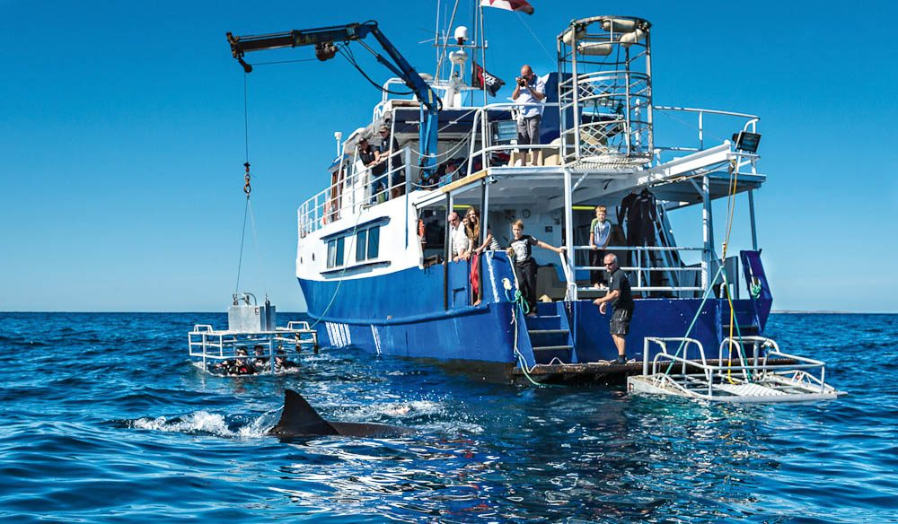 The shark-ready Princess II lowers the cage as a shark swims by