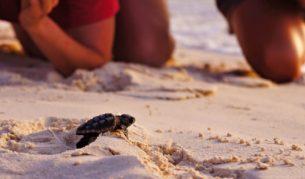Turtle caring