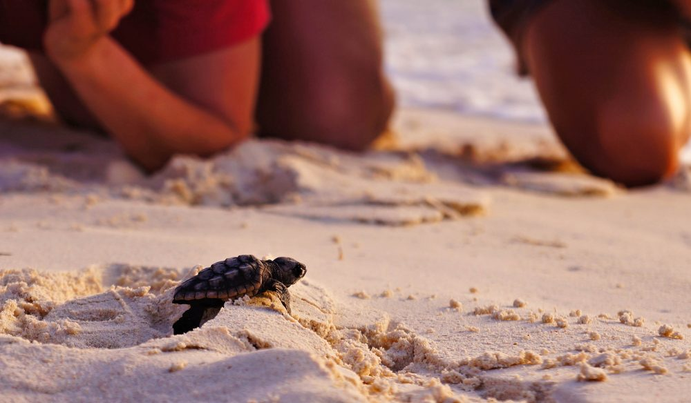 Turtle tourism: Help look after cute creatures of Ningaloo Reef