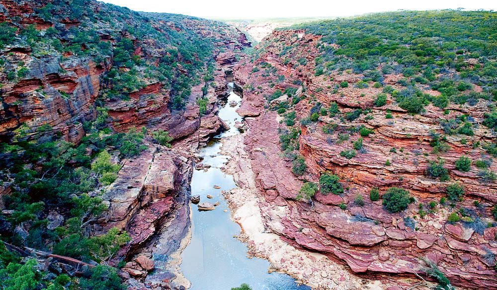Scenic walks in Kalbarri National Park lead to lookouts with views over deep gorges, trickling streams, and lush redgums contrasting with red sandstone.