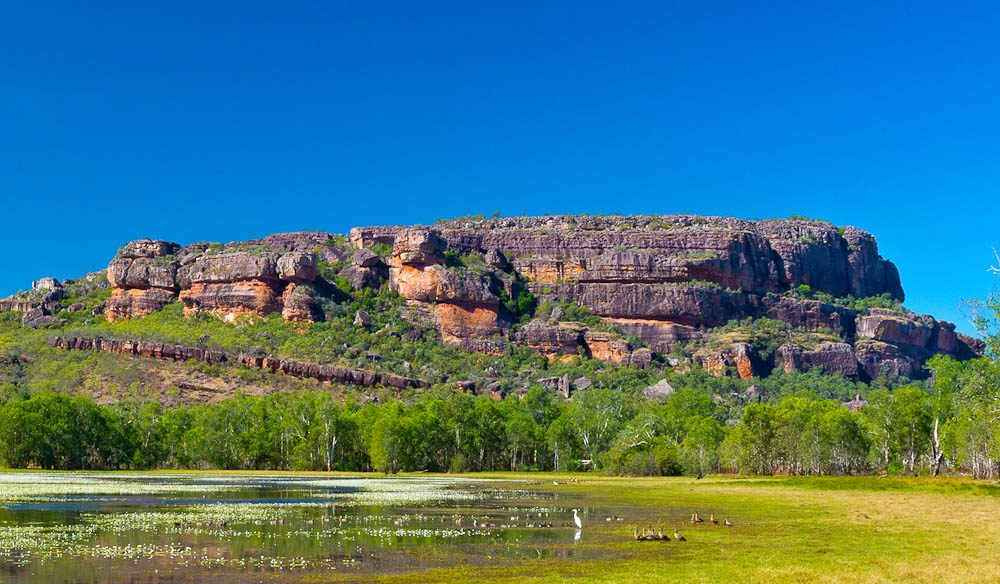 Anbangbang Billabong, Kakadu (Photo: Tracy Ryan).