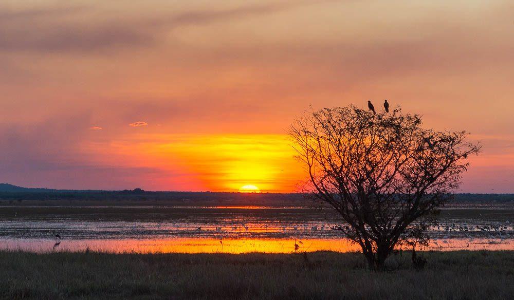 Goose Camp, Kakadu