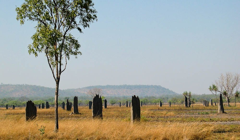 Magnetic termite mounds, Litchfield National Park, Northern Territory