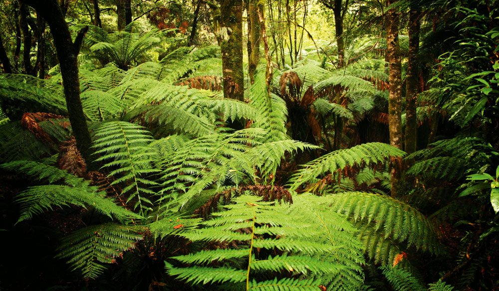 Ancient, under threat: The Tarkine, Tasmania.