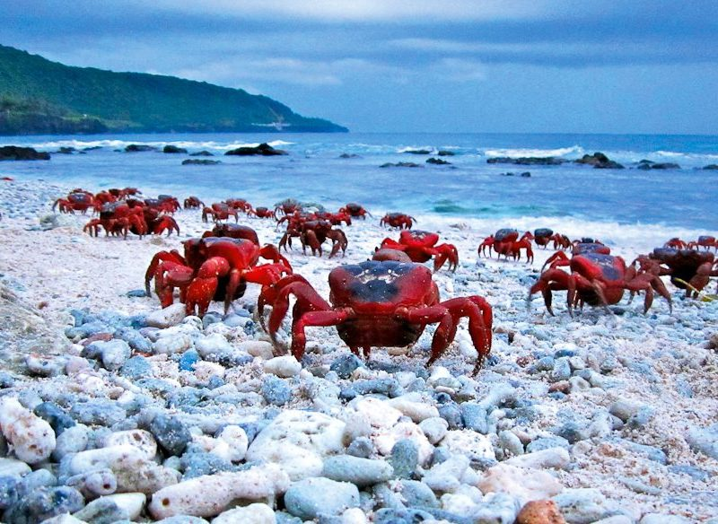 Christmas Island - Our Galapagos