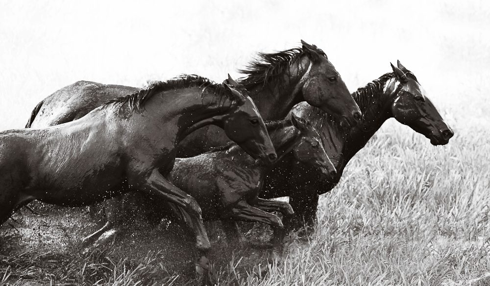 """Will Power: """"These horses would let nothing come between them and their will to run free."""" (photo Nick Leary)."""