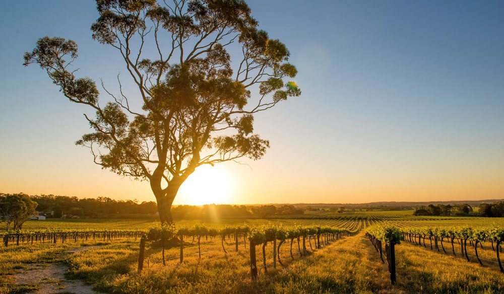 Barossa, SA: A weekend would be lovely but a week would be even better.