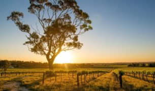The Barossa (SA), rustic country with city chic mixed with serious foodie credentials.
