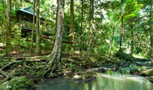 Narrows Escape, nestled deep in Sunshine Coast Hinterland rainforest.