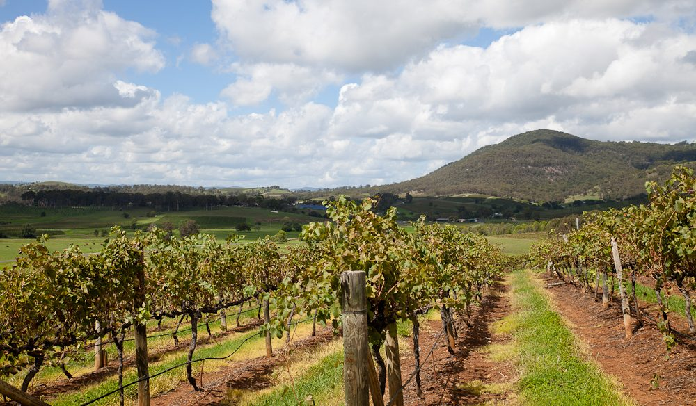 Lindeman's Estate, Pokolbin, Hunter Valley, NSW (photo: Ryan Auberson-Walsh).