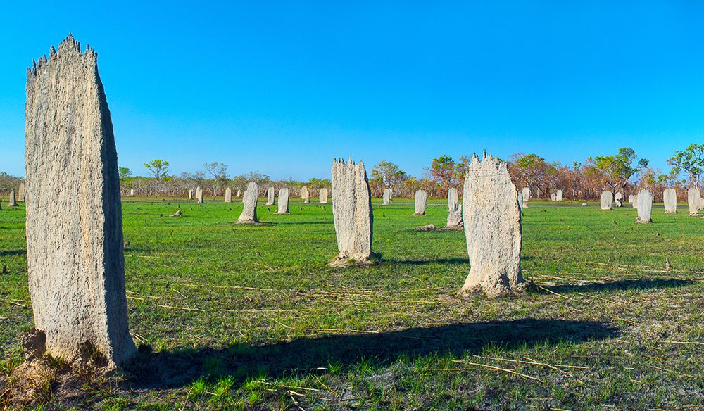 Magnetic termite mounds, Litchfield National Park, NT (Photo: Tracy Ryan).