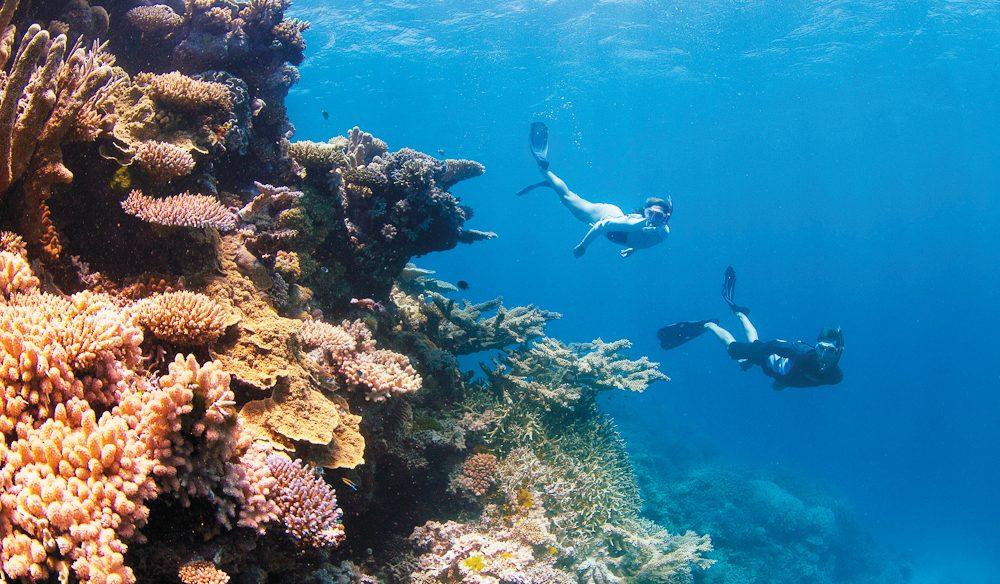 Snorkelling clam gardens: Great Barrier Reef, Queensland.