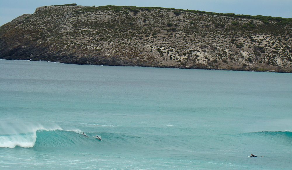Dolphins power in to the break at Pennington Bay, Kangaroo Island.