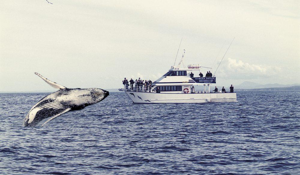 Keeping an eye on giants: whale watching Merimbula, NSW.