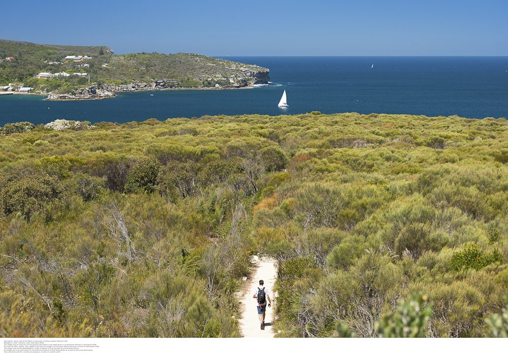 The Spit to Manly trail: makes you forget you're in the bog smoke.