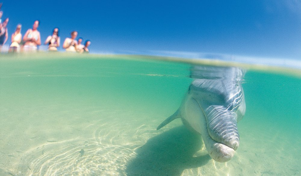 You can go beyond Monkey Mia for dolphin (and other sea creature) spotting.