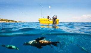 Snorkel with playful seals, off Narooma NSW.
